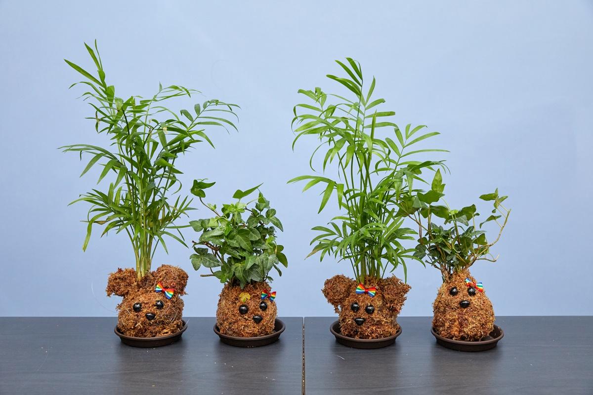 테이블 야자와 아이비를 활용한 수태 토피어리들.